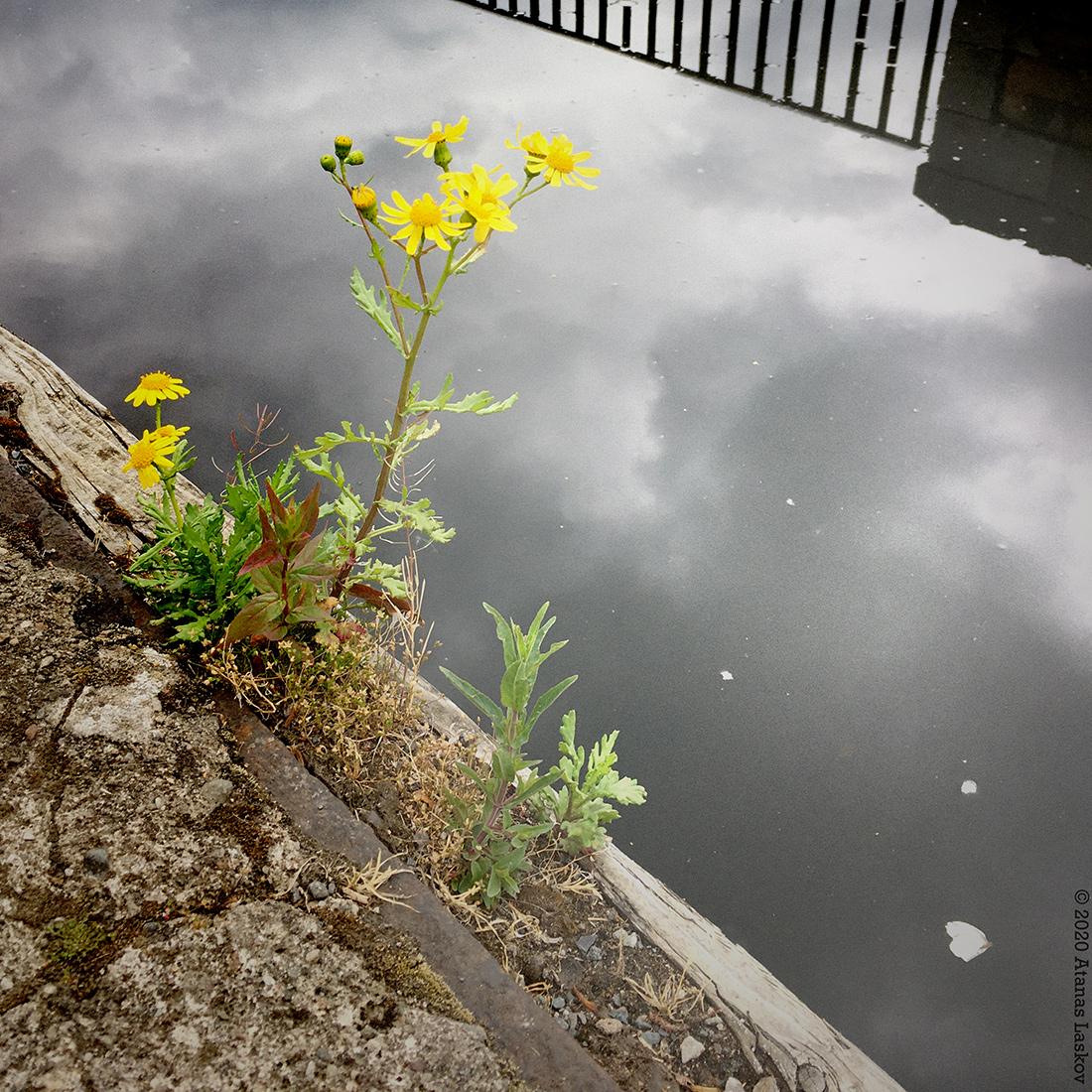 Pettite fleur jaune