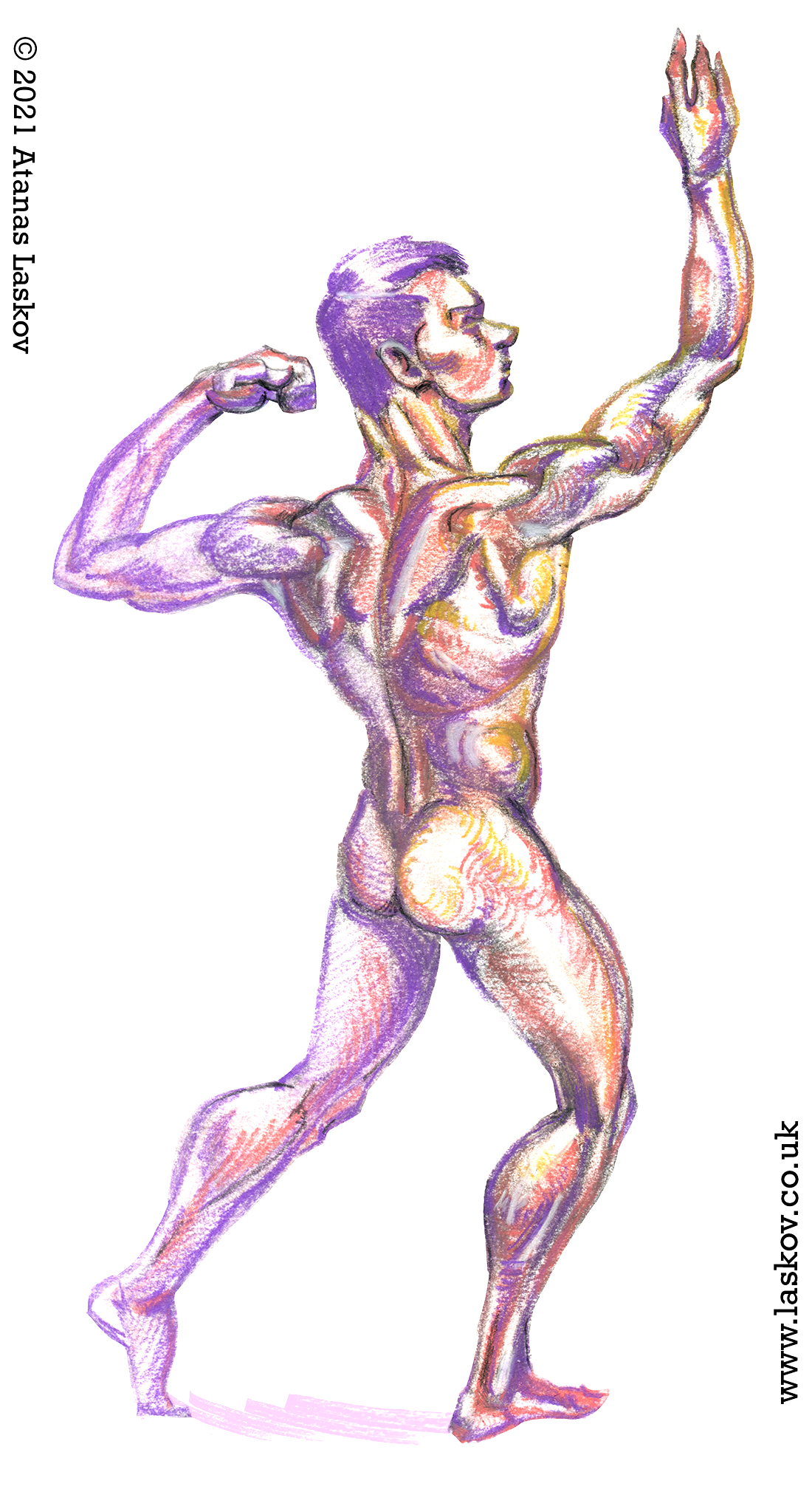 Study of the muscles of the back
